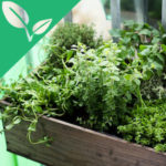 A planter box with herbs and other greens