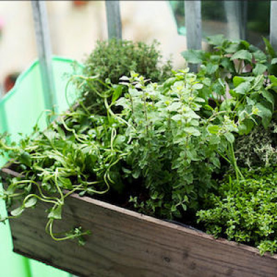 A planter box with herbs and other greens.