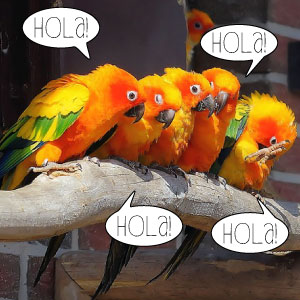 hola spanish class