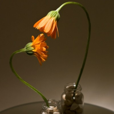 Two orange flowers under a spot light, 'looking' at each other with love