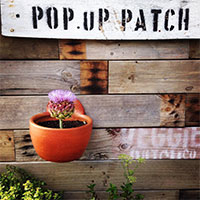 A Pop Up Patch sign and flowerpot