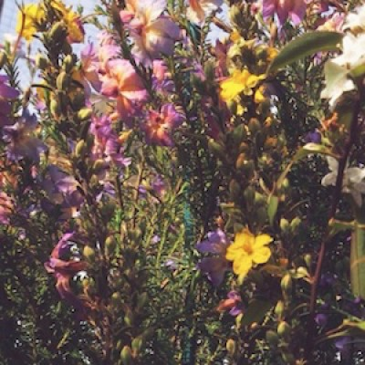 Native Plants for Your Space
