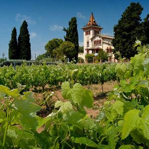 A Spanish vineyard