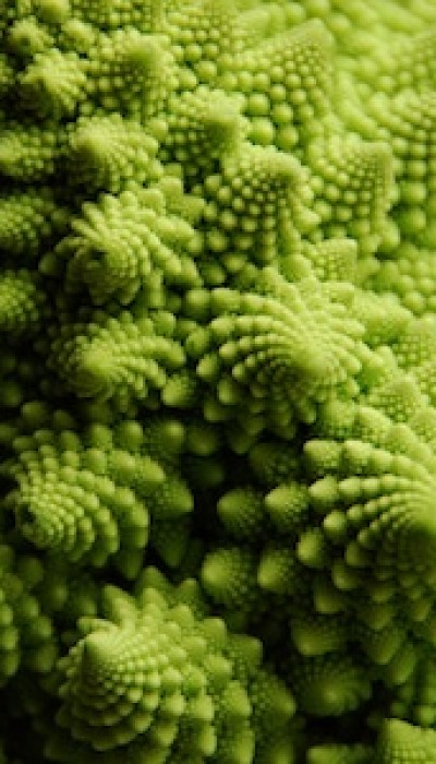 Biomimicry: Patterns Inspired Nature with Melissa
