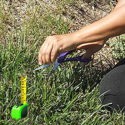 A person cutting grass with a ruler and scissors in a strive for perfection.