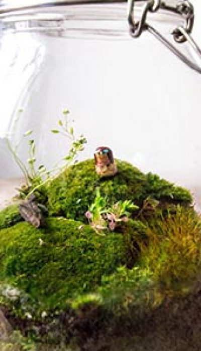 Closed Moss Terrariums with Marloes