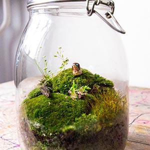 A large glass jar with a tiny, green landscape inside