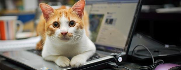 A cat on a laptop