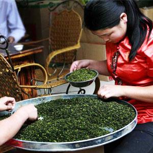 Two workers sort tea leaves.