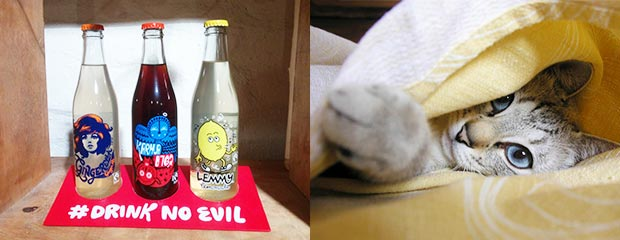 Ginger ale, cola, lemonade and a cat peeking out from under a blanket.