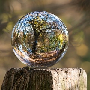 glass ball reflecting tree