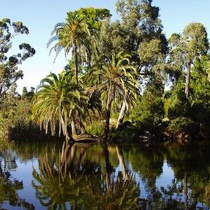 450px-Melbourne_Australia_Royal_Botanical_Garden