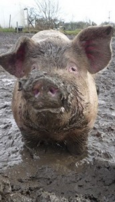 """How to """"Wrestle A Pig"""": Better Arguments with Unreasonable People with Gordon ONLINE"""