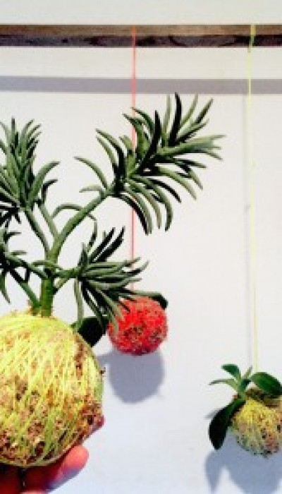 Kokedama: The Hanging Moss Ball Plant with Sara