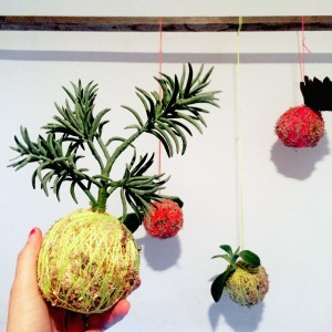 kokedama_sample