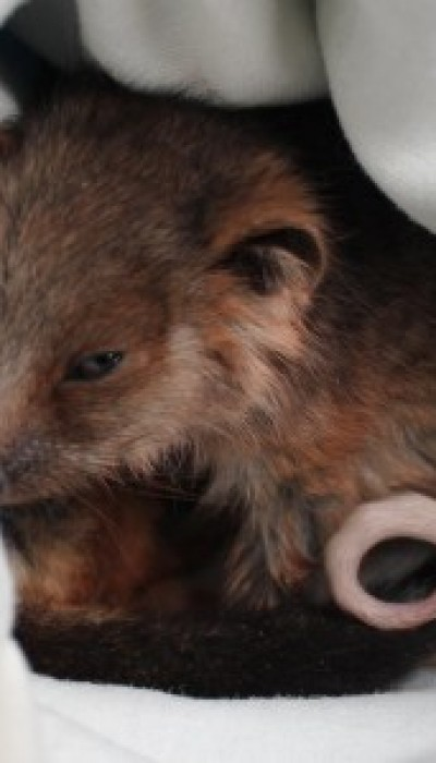 What You Can Do To Help Native Wildlife with Elodie