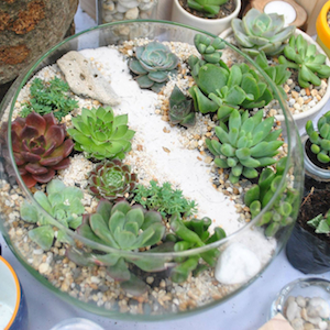 open terrariums