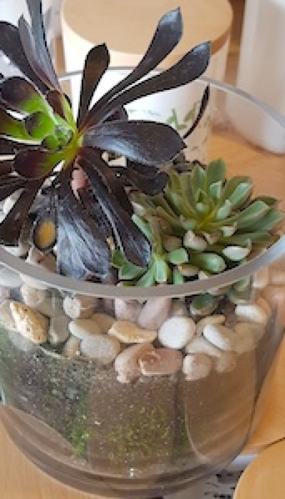 Open Terrariums with Miss Emily
