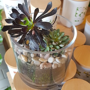 Open Terrariums With Miss Emily Laneway Learning Melbourne