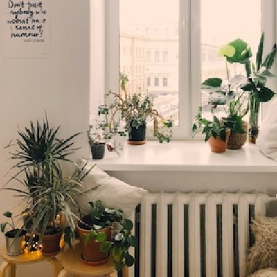 Keep Your House Plants Happy with Sara