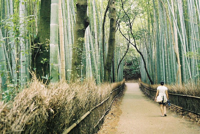 800px-Bamboo_forest,_Arashiyama,_Kyoto_(oliveheartkimchi)