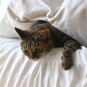 Animal Brown Cat Bed Pet Sleepy Whisker