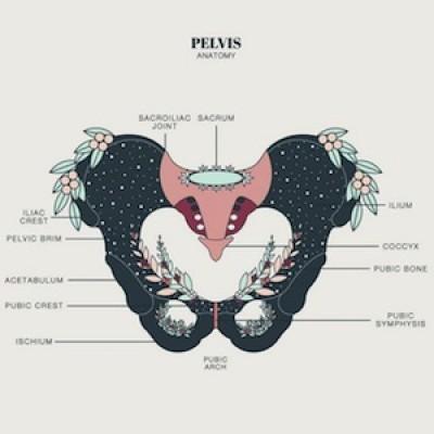 Feldenkrais: Pelvis Alive! with Ralph ONLINE