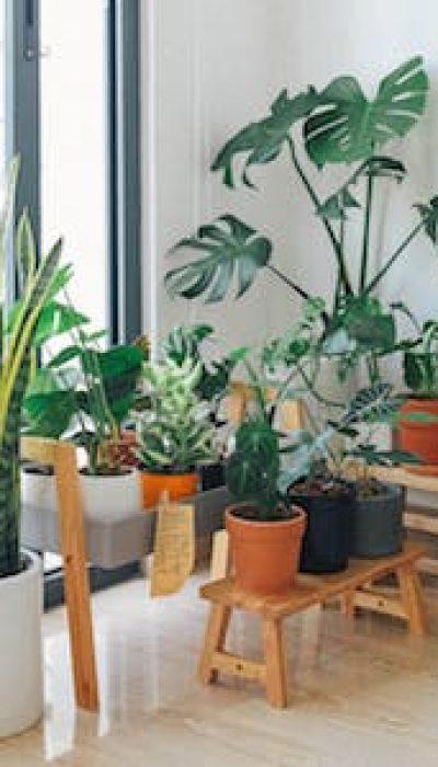Happy House Plants with Sara