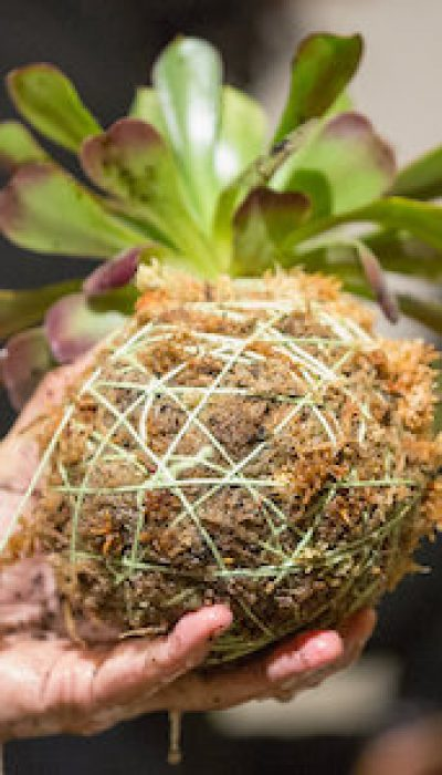 Kokedama: Japanese Moss Balls with Marloes