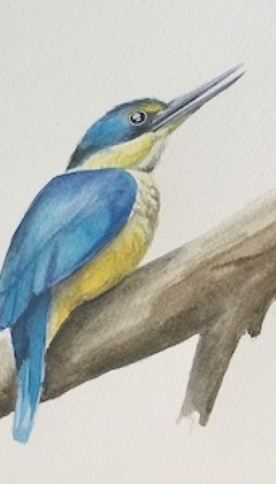 Watercolours – Painting Birds with Marloes ONLINE