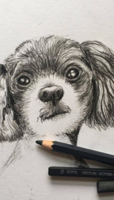 Pet Portraits with Marloes ONLINE