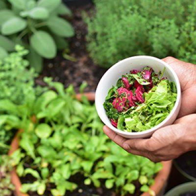 Veggie Gardening with Patrick ONLINE